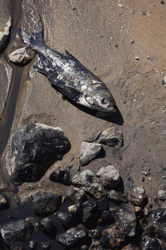 水生动物,海产品,水生物,海底动物,煤油,贝类外壳,海螺壳,软体动物