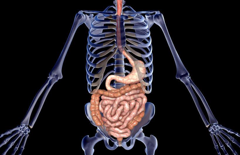 生物内脏结构图