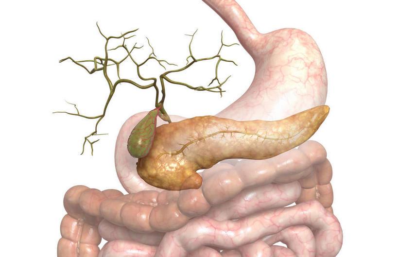 大肠,盲肠,小肠