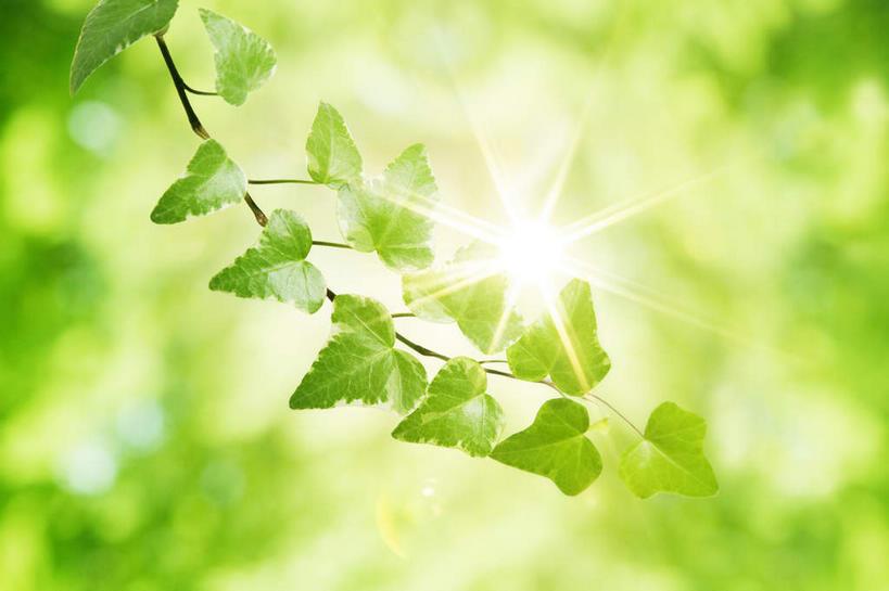 模糊,树叶,楼梯,光线,线条,景观,长春藤,常春藤,实木,枝条,v树叶,影子面光束玻璃绿叶图片