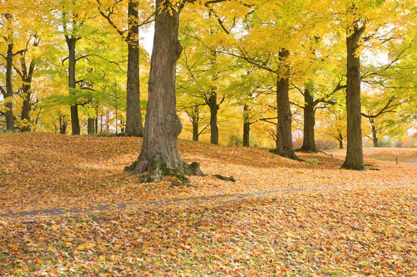 光线,影子,景观,枯叶,落叶,树桩,很多,娱乐,树,树干,树木,绿色,阳光