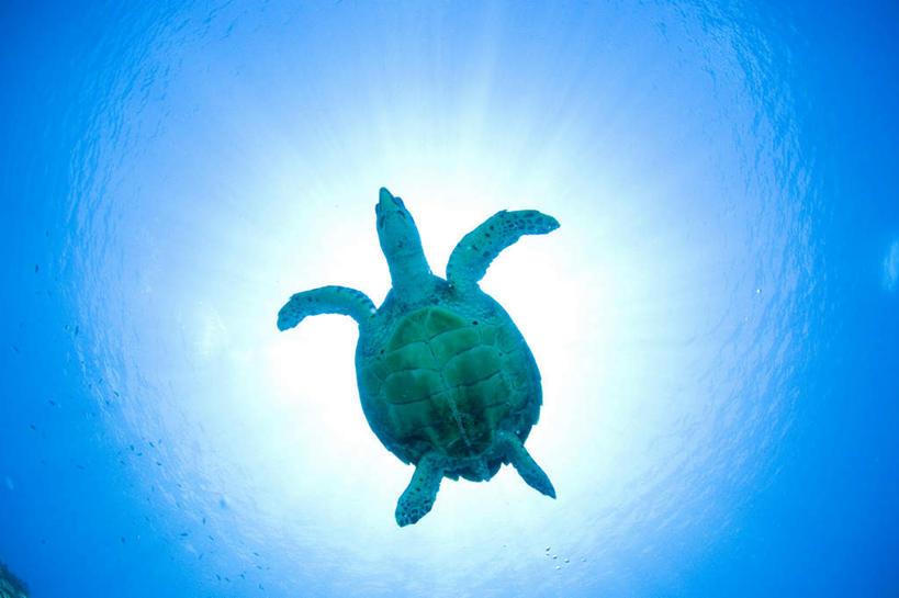 游泳,无人,横图,室外,白天,仰视,海底,水下,海浪,海洋,龟,浪花,水底