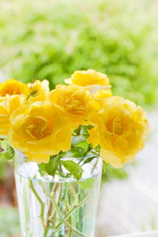 玻璃制品,花,花瓣,花朵,鲜花,一个,黄色,阳光,自然,玻璃瓶,瓶子,花苞