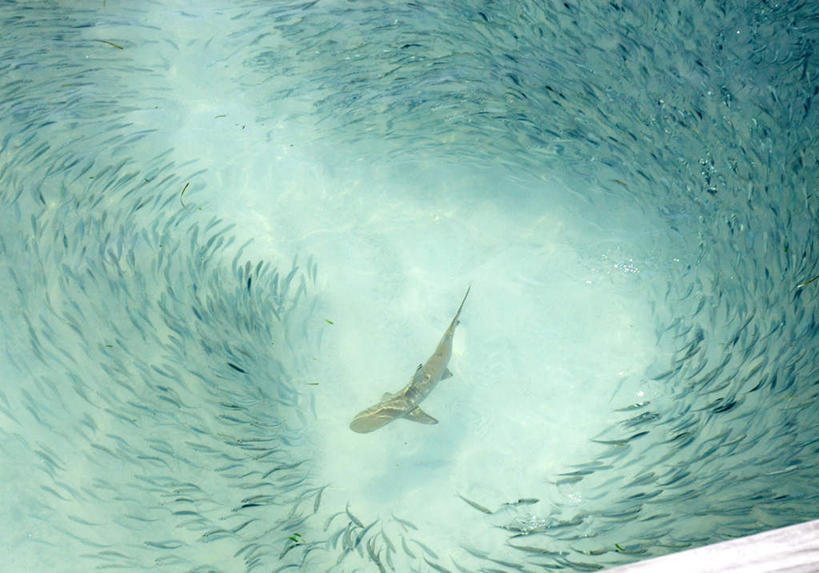 光盘海底动物图片