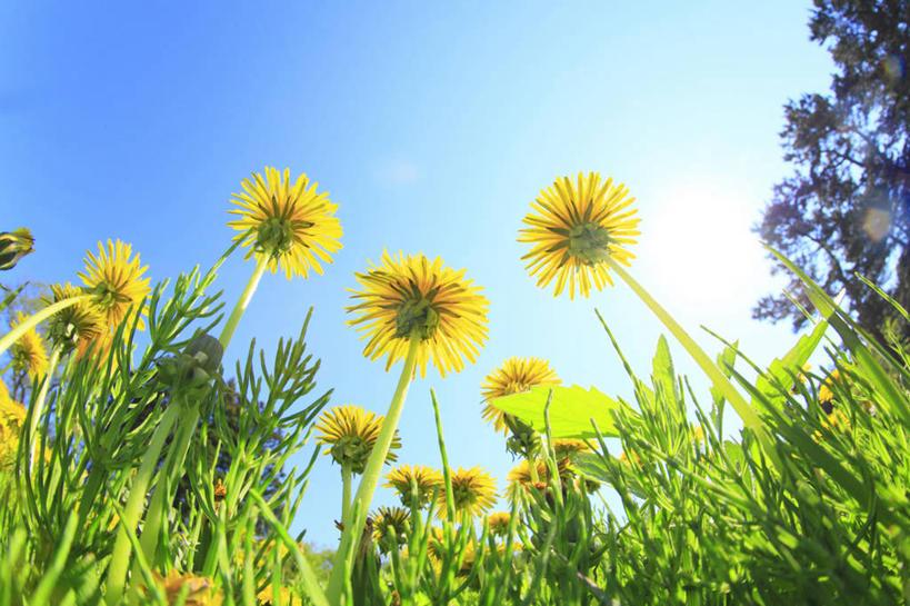 无人,横图,室外,白天,仰视,爱情,旅游,度假,草地,草坪,花海,花圃,美景