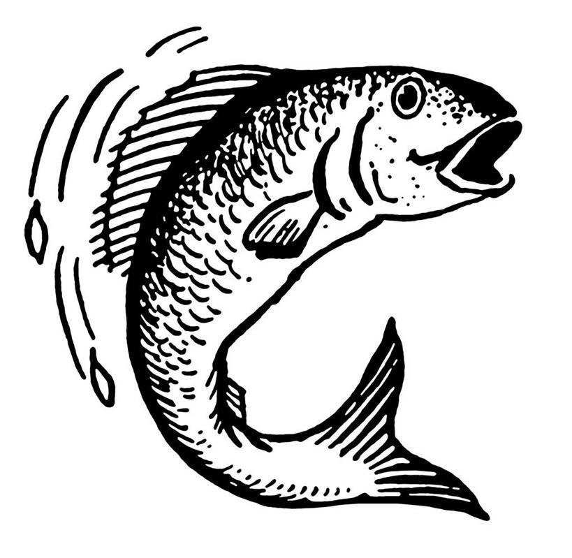 鱼跳跃的简笔画