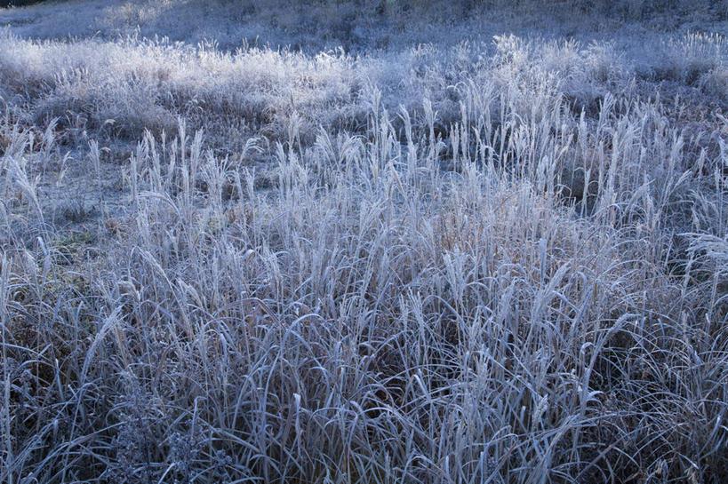 影子,积雪,景观,雪景,冬季,冬天,芒草,阳光,自然,景色,寒冷,自然风光