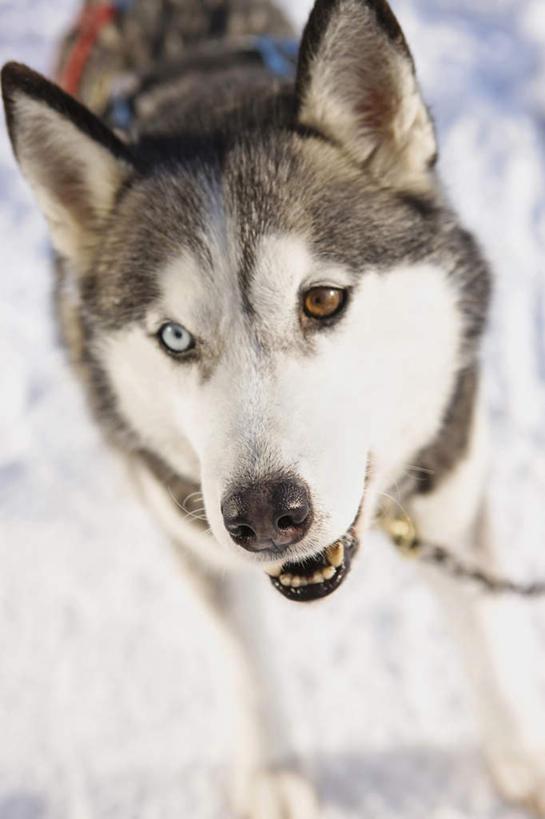 动物正脸照高清
