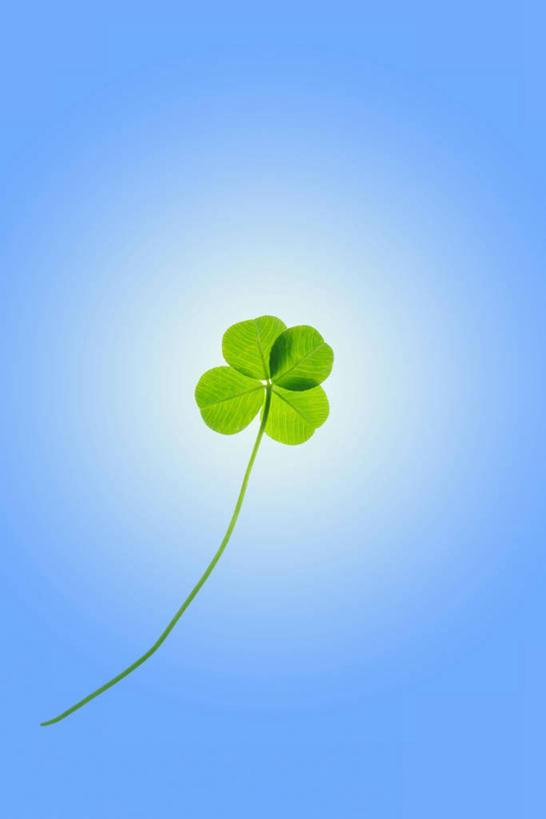 无人,竖图,室内,特写,白天,正面,自由,叶子,一片,蓝色背景,绿叶