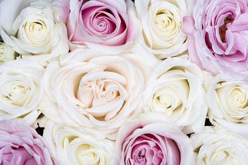 横图电脑壁纸玫瑰图片
