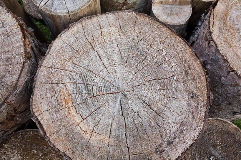 阴影,反射,影子,圆环,圆圈,树桩,年轮,树,树干,木桩,年龄,环状,横截面