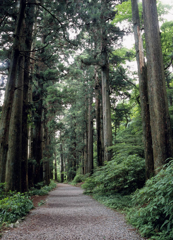 壁纸 风景 森林 树 桌面 592_819 竖版 竖屏 手机