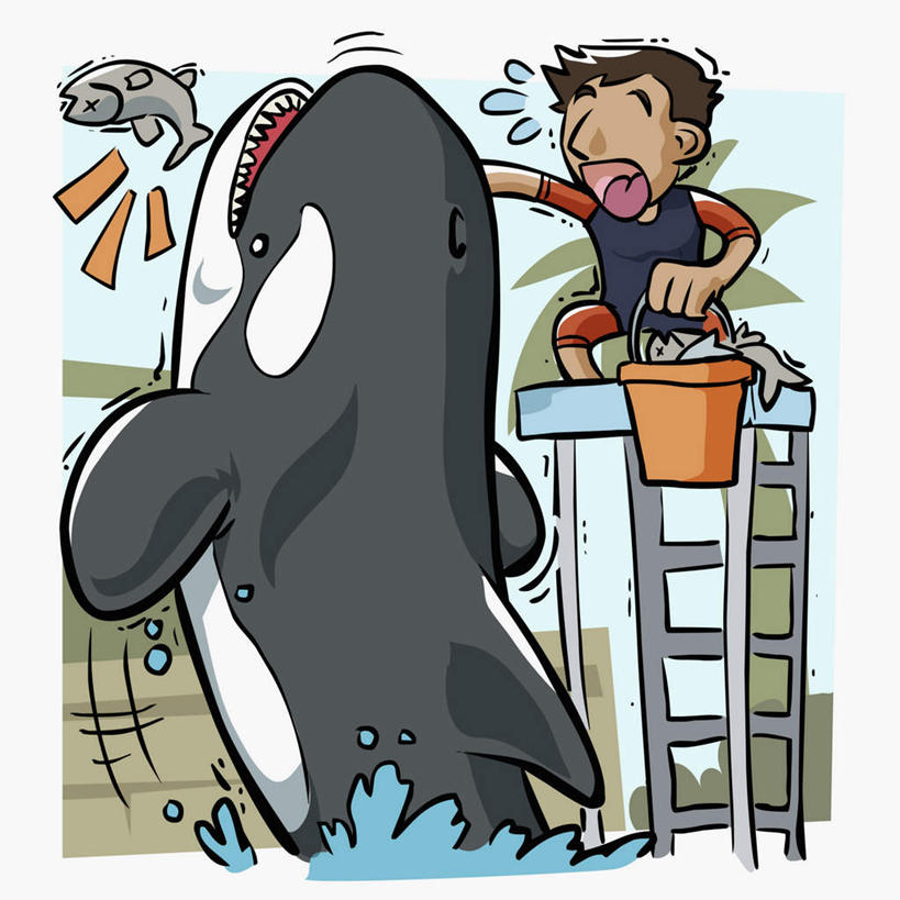 鲸手绘图画