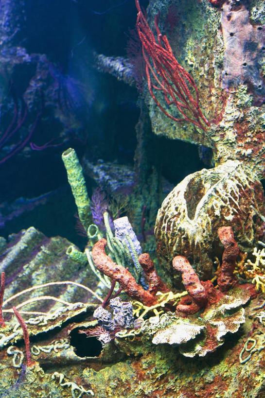 珊瑚礁,海洋生物,无脊椎动物,阳光,自然,享受,休闲,景色,放松,腔肠