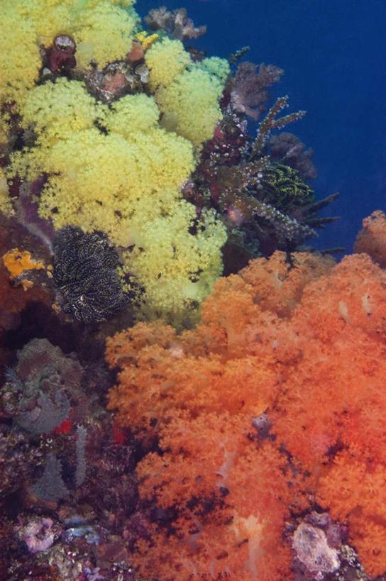 黄色,自然,海水,享受,休闲,橙色,景色,放松,海底世界,东南亚,腔肠动物