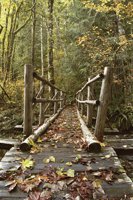 森林风木桩画手绘