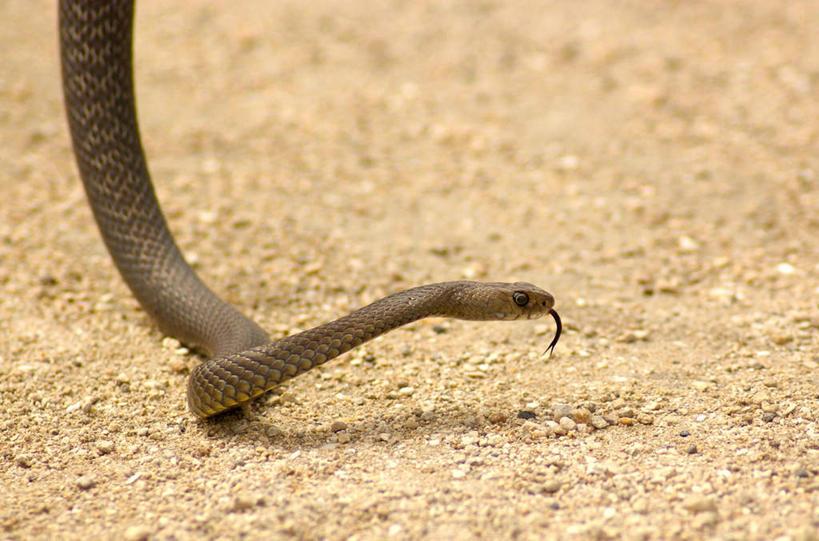 蛇动物的影子图片