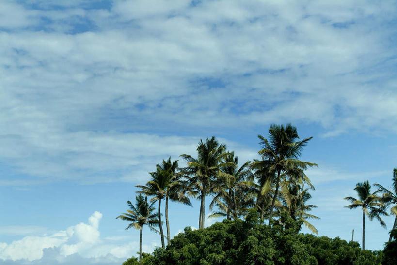 美景,植物,棕榈树,景观,云,云朵,云彩,娱乐,蓝色,绿色,白云,蓝天,天空