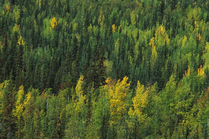 室外,白天,旅游,度假,美景,森林,树林,植物,加拿大,景观,娱乐,树,树木