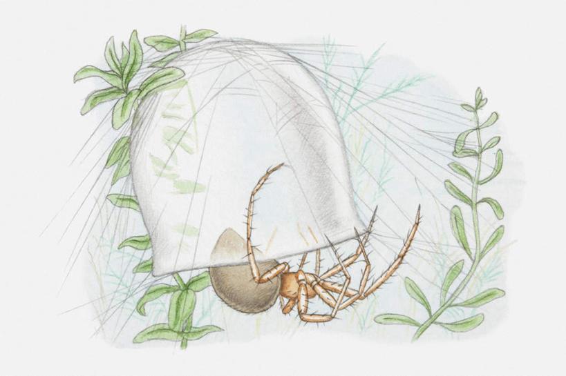 能捉害虫的动物画一画