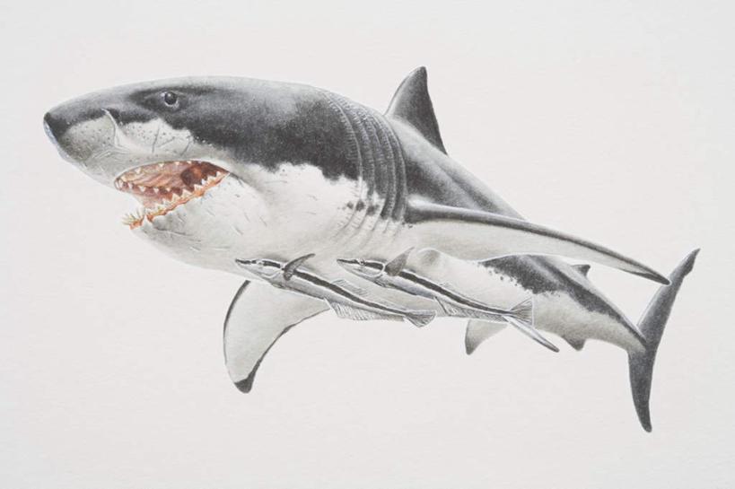 合成,图画,水产,鱼类,海洋生物,画,电脑合成图,数码合成图,水生动物