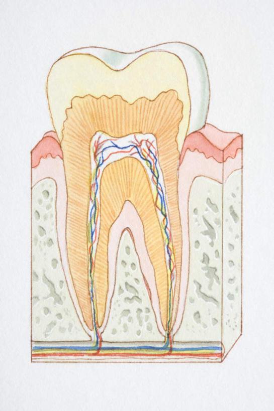 牙齿,无人,竖图,插画,室内,白天,白色背景,正面,数码,科技,阴影,科学