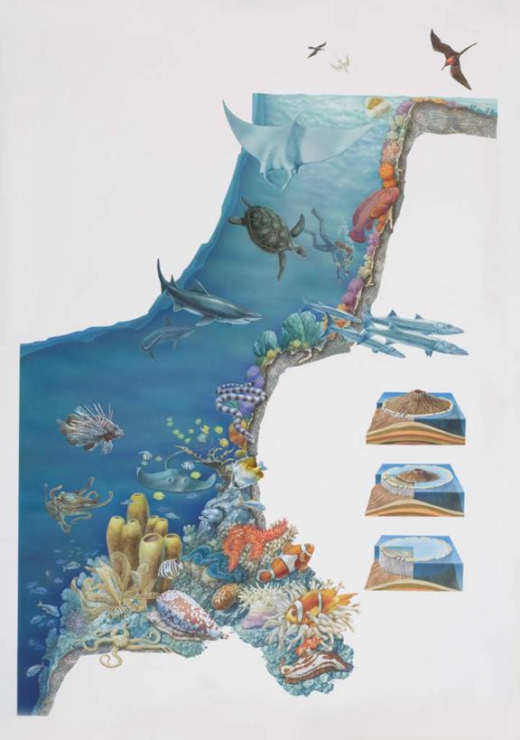 海洋生物,画,海水,电脑合成图