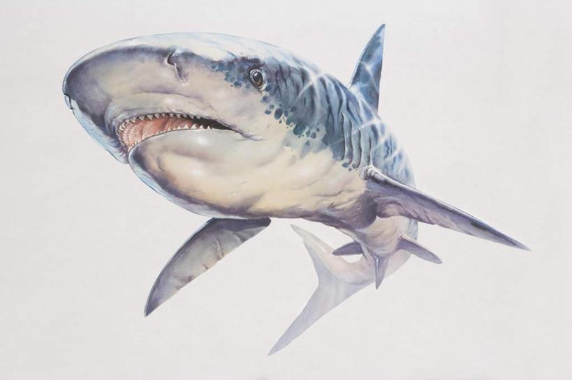 图画,海洋生物