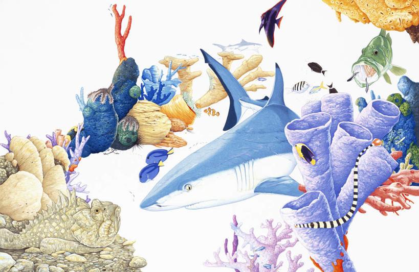 水生动物,海产品
