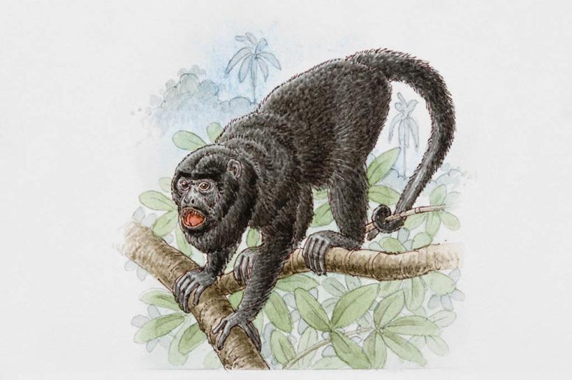 猴子 手绘 写实