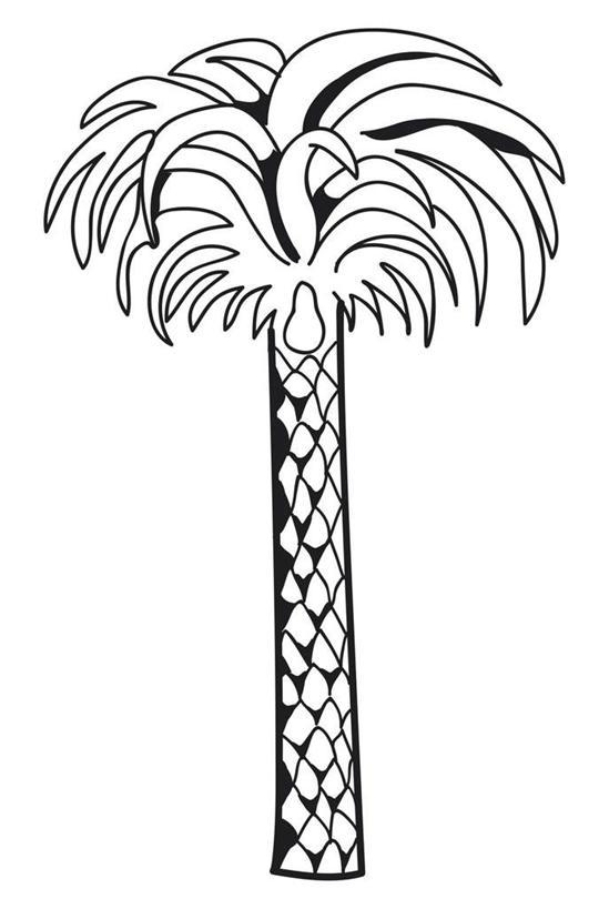 树木生长过程黑白
