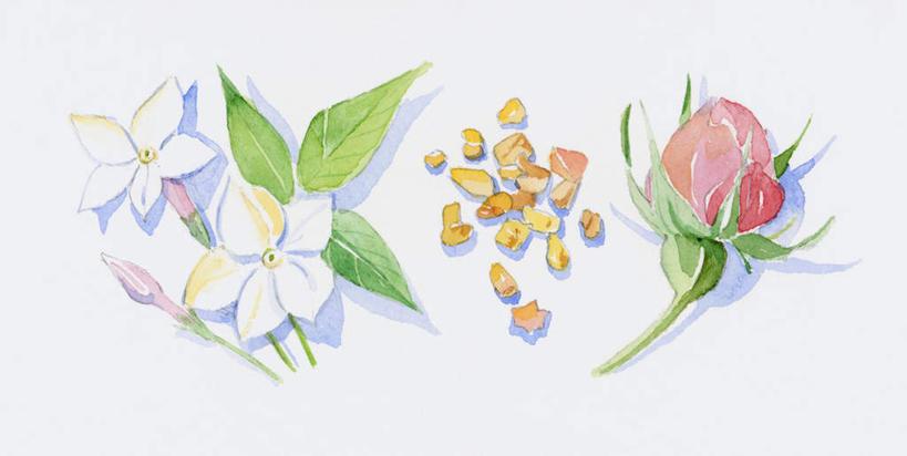 花花瓣花朵