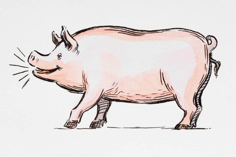 简笔水墨画猪步骤