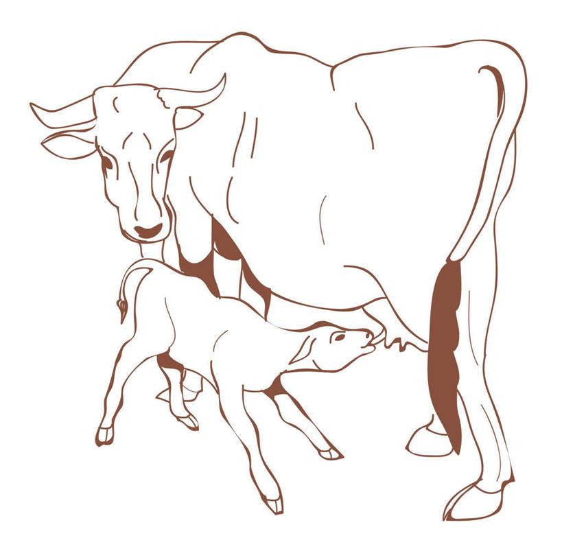 牛,喝,咬,阴影,网络,高光,几何,计算机图形,合成,图画,注视,画,动物