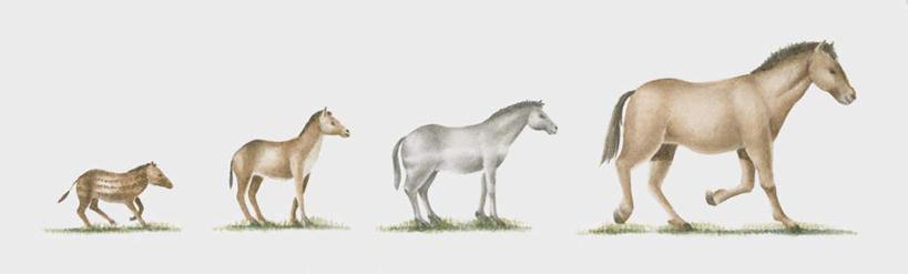 马,野生动物