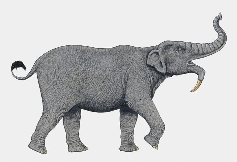 侧面画大象简单步骤