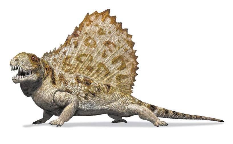 奇齿龙,史前动物