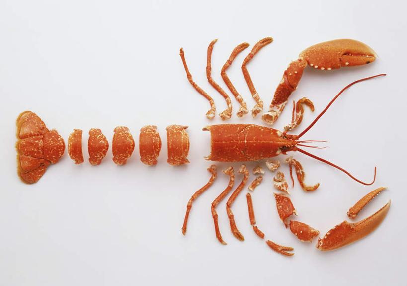 海鲜,龙虾,无人,横图,俯视,室内,白天,白色背景,一排,切开,阴影,整齐