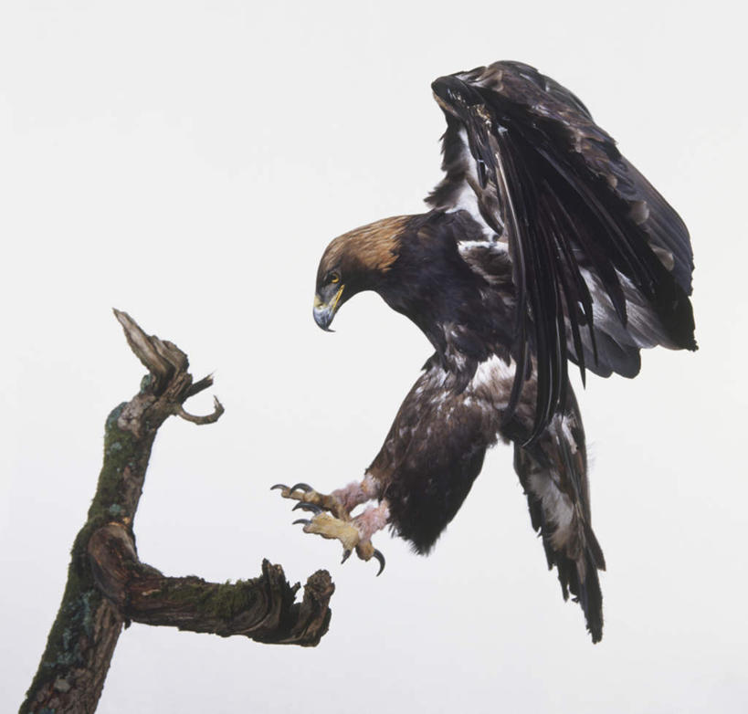 p图素材背景 侧面翅膀