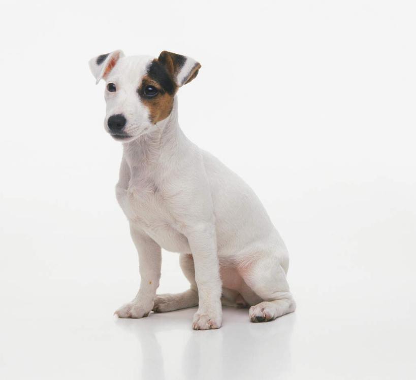 观察动物狗 图片合集