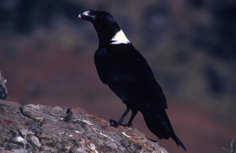 野生动物,非洲,南非