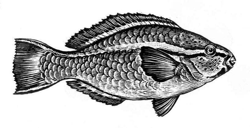 海洋生物,画,电脑合成图,数码合成图,水生动物,海产品,水生物,漫画