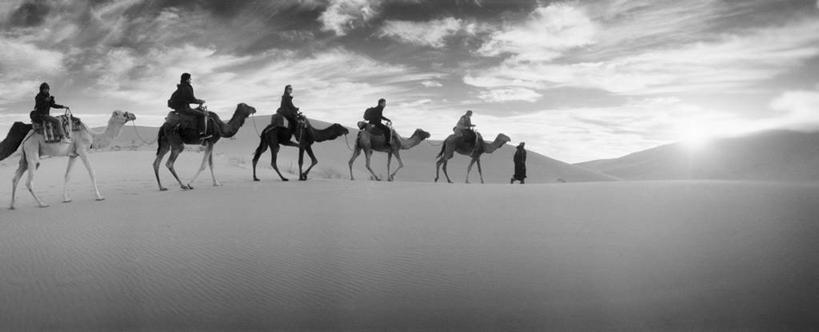 沙漠,野生动物