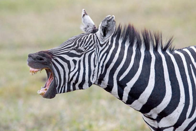 动物张大嘴巴的图