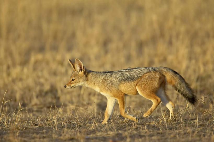 无人,公园,走,横图,俯视,室外,特写,白天,植物,狼,野生动物,非洲
