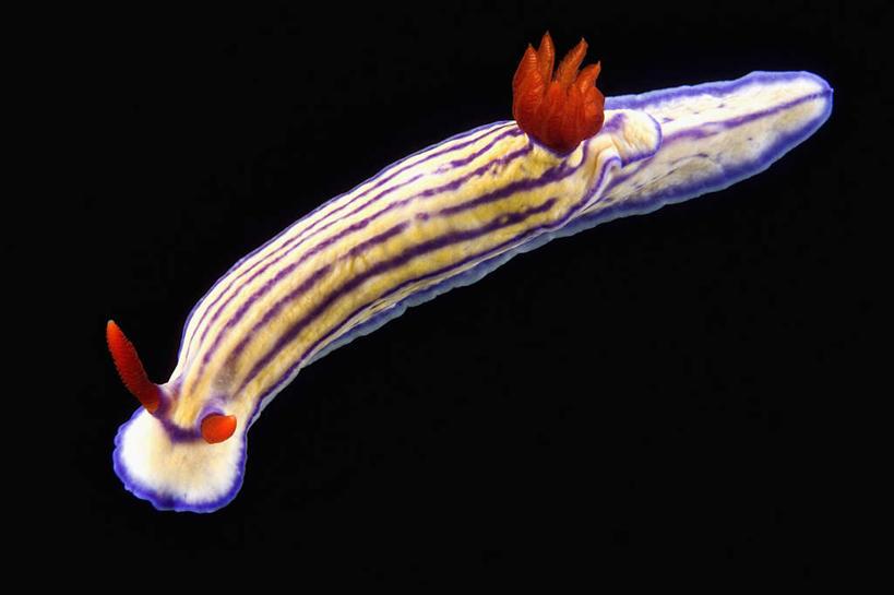海底世界,软体动物