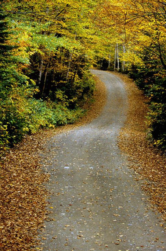 放松,乡间小路,生长,成长,北美,北美洲,自然风光,美洲,北亚美利加洲