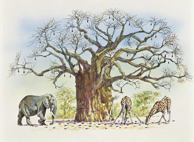 地形,景觀,非洲象,高光,幾何,計算機圖形,合成,圖畫,娛樂,畫,風景