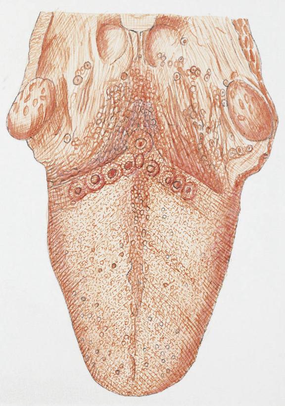数码合成图,生物学,合成图,漫画,写实,具体,具象,人体结构,乳突,舌头