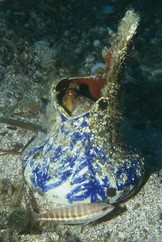水产,鱼类,海洋生物,一个,自然,动物,容器,两只,陶器,摄影,单个,软体